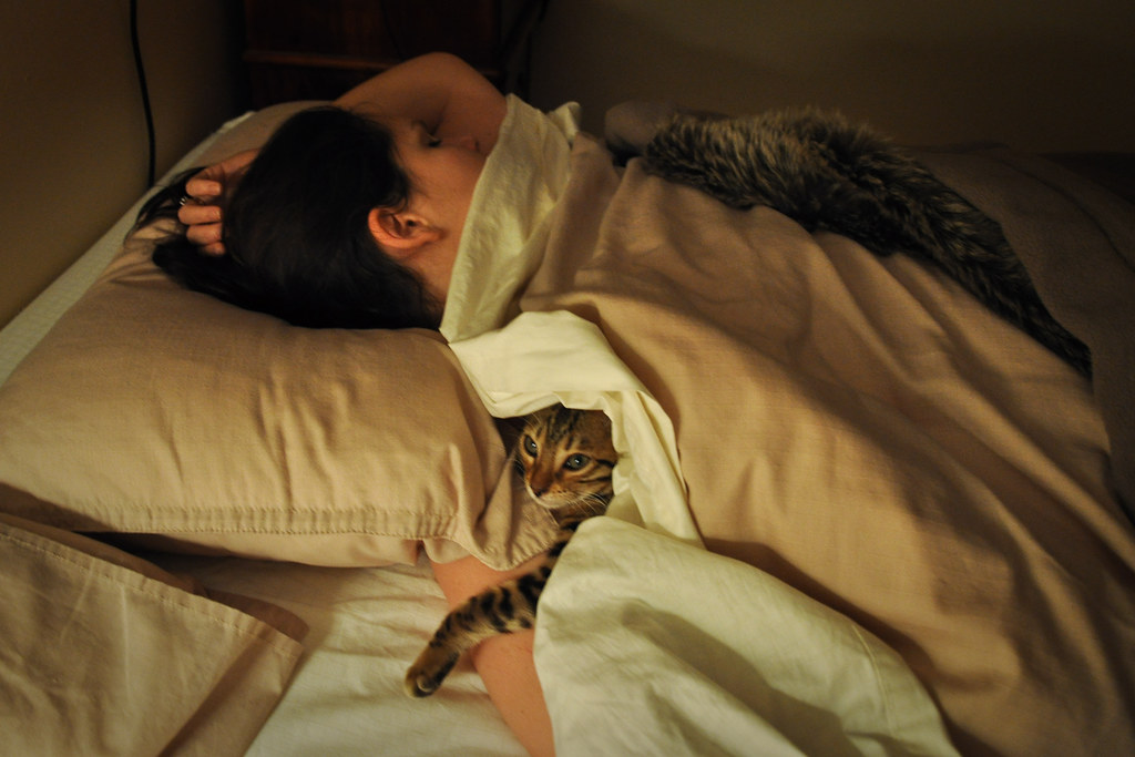 Funny Cat Asleep