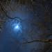 Shiny moon seen through three branches