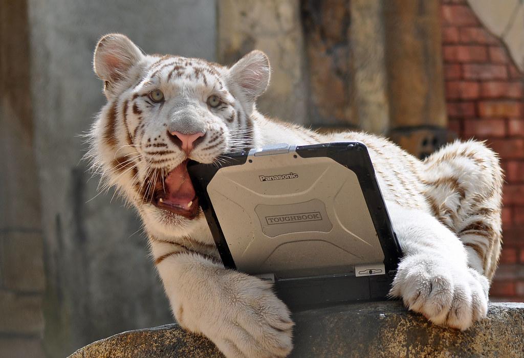 Тигр жрет Toughbook CF-31 по заданию Forbes