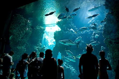 Grand Aquarium Du Mus 233 E Oc 233 Anographique De Monaco Mus 233 E