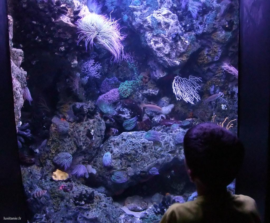 Beaucoup d'aquariums plus petits, avec ici des anémones