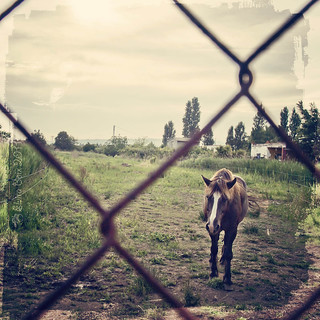 Lonely horse/ Caballo solitario | by elvira boix