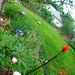 Qiqi and Caroline's Garden 6-8-09 7