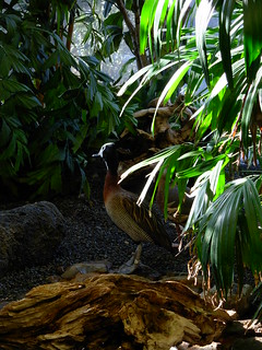 Duck in the Jungle | by mwendus