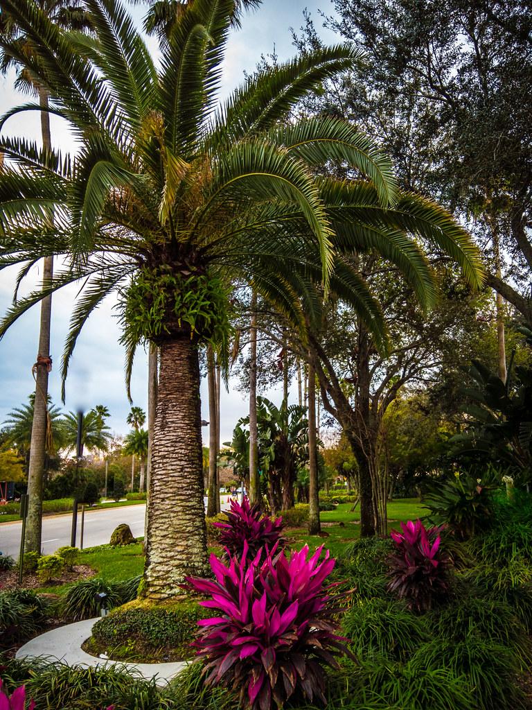 Palm Tree in Orlando Sidewalk Garden   Yesterday I took a on…   Flickr