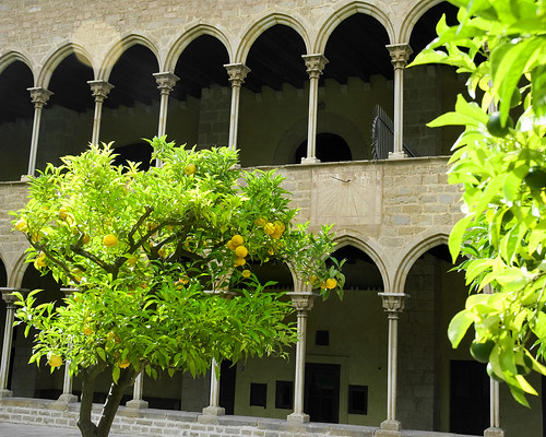 Citrus Trees in Pedralbes Monastery | by MarcelGermain
