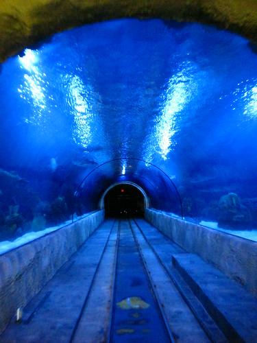 Houston Texas Downtown Aquarium Ferris Wheel Downtown Skyl
