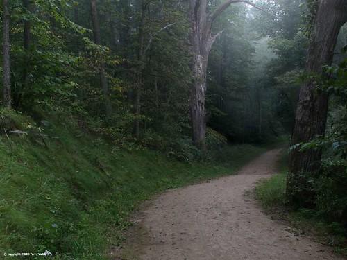 Pathway through a dark forest | Light beckons the traveler ...