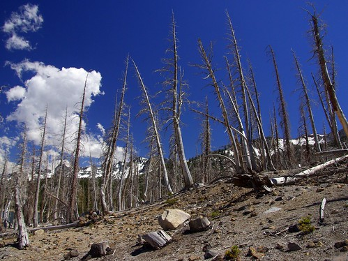carbon dioxide killed trees | by joshhikes
