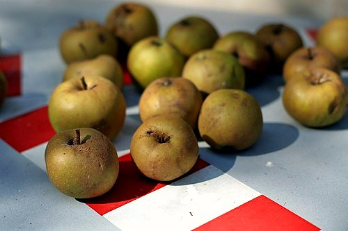 country apples | by David Lebovitz