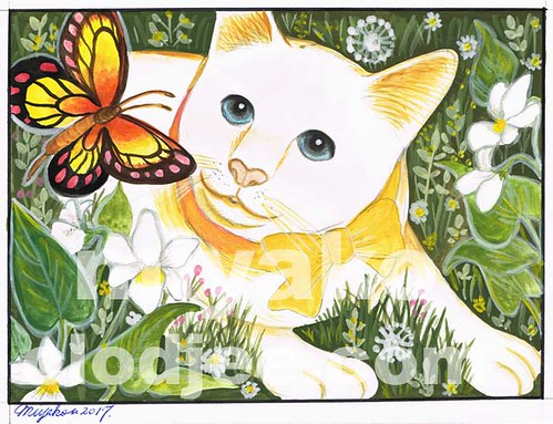 An American shorthair and a butterfly in a meadow