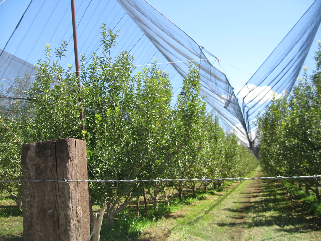 Huerta Manzanera El Terrero Namiquipa Chih Apple Orch