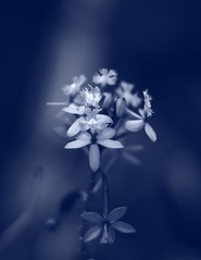 Blue [Explored] | by Emmanuel_D.Photography
