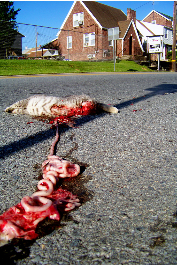 Pictures Of Roadkill Cats