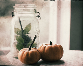 October's the month When the smallest breeze Gives us a shower Of autumn leaves. Bonfires and pumpkins, Leaves sailing down - October is red And golden and brown | by CharlaneG