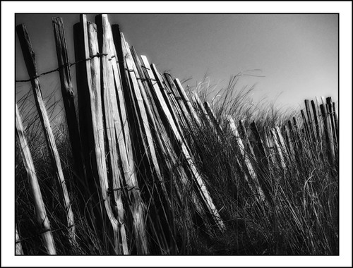 Dune fence, Rosses Point Infrared Effect | by Peter Kelly1