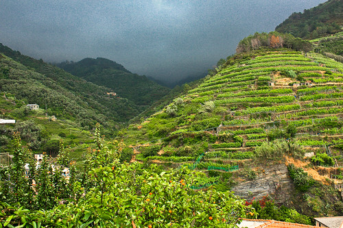 Terrace farming vernazza italy another spectacular for Terrace cultivation