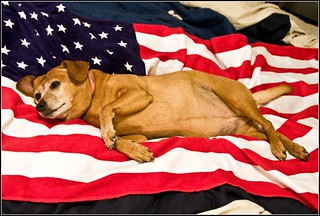 LG: 4th of July Pin-Up Dog? | by Tony Fischer Photography