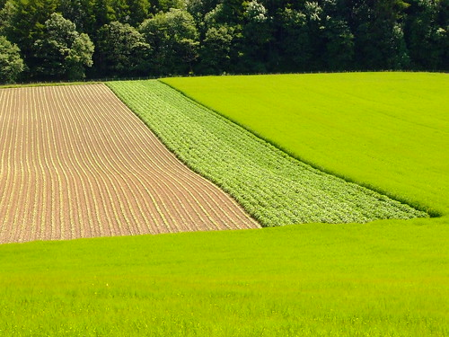 STRIPES, in rural green. | by the water watcher 05.