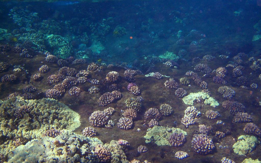 Molokini ocean floor view of the ocean floor at molokini for Ocean s floor