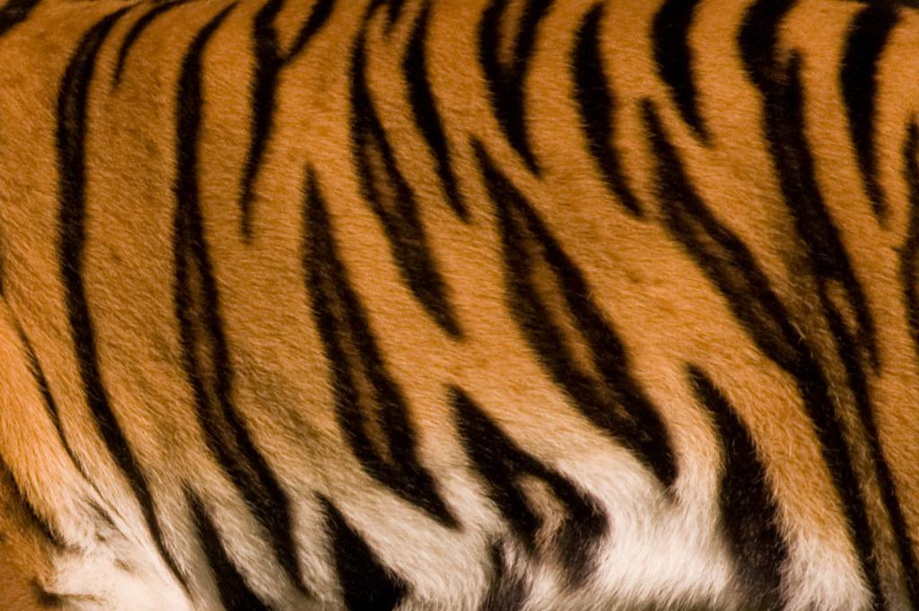 white tiger skin background - photo #11
