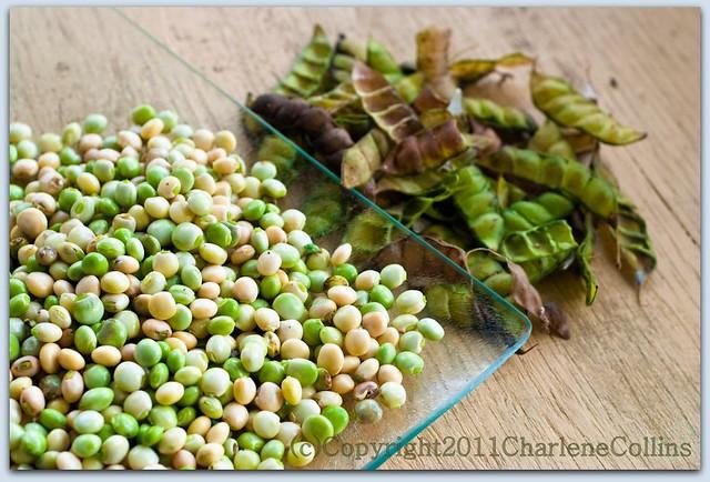 how to cook fresh gungo peas