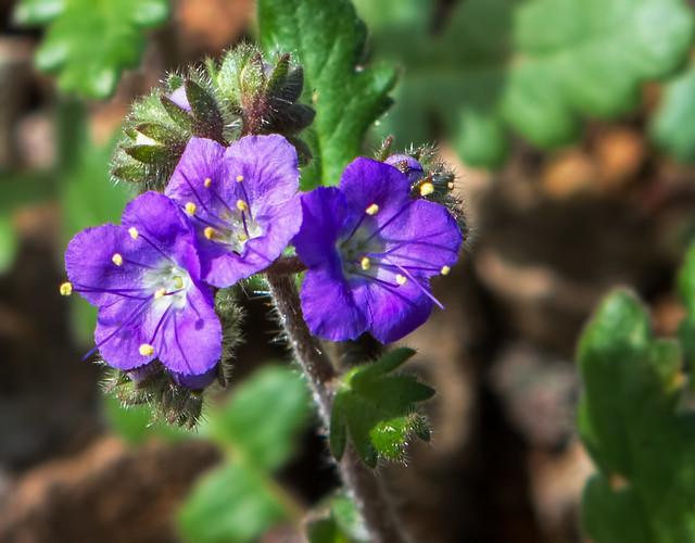 Flower-6-7D1-022117