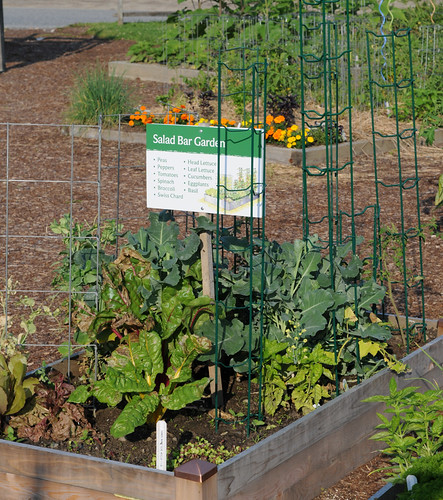Salad Bar Garden July 21 To Learn More See The Kitchen
