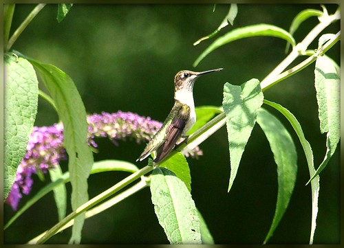 Hummer with Bokeh Arch | by eric ashford