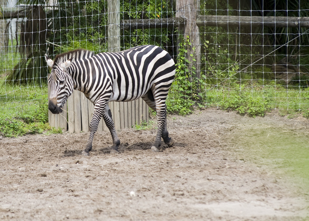 Tampa Lowry Zoo Food Stamp Discount