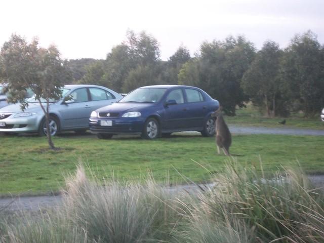 I Car Jacking Shooting Munds Park