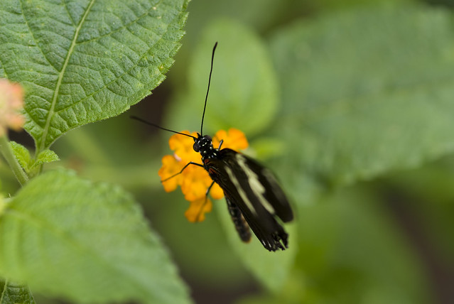 Butterfly at brookside gardens flickr photo sharing - Butterfly On Flower Flickr Photo Sharing