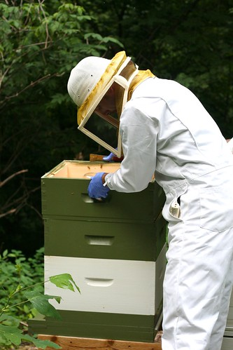 Checking on the Hives | by Chiot's Run