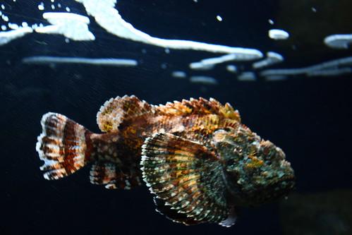 Rock fish looks like a rock to me trinimoi flickr for Fish that looks like a rock