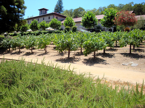 DSC28664, Beringer Vineyards, Napa Valley, California, USA | by jimg944