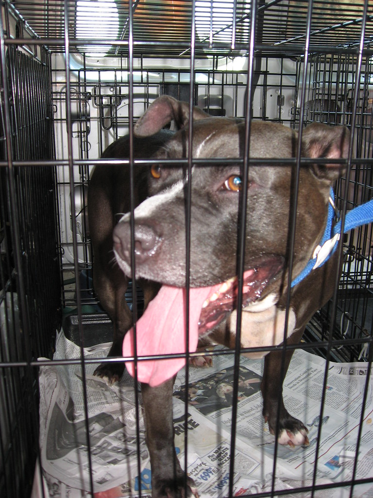 Image Result For Can Spayed Female