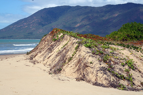 wangetti beach - photo #12