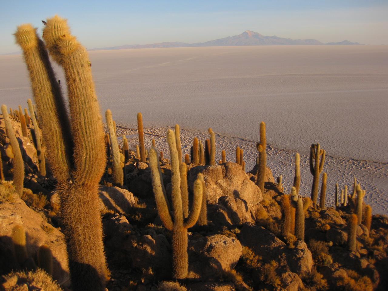 cacti and salt flats