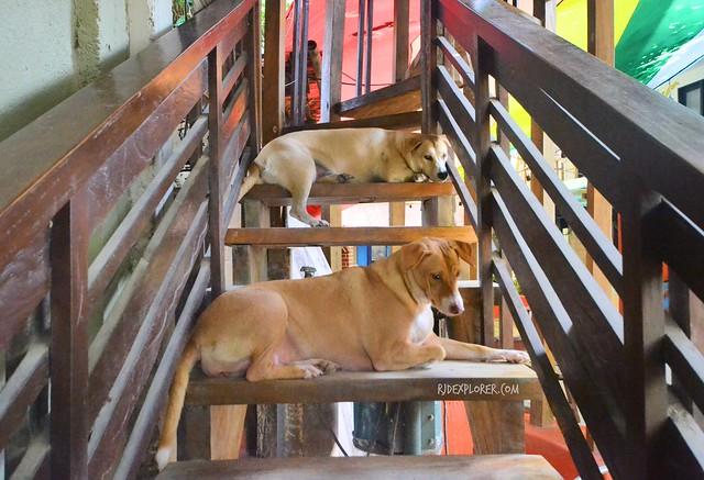 lazy dogs in boracay