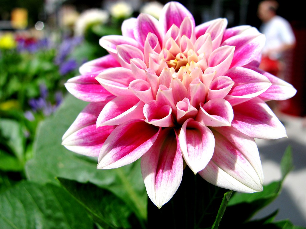 trader joe s pink flower Sabrina Piper