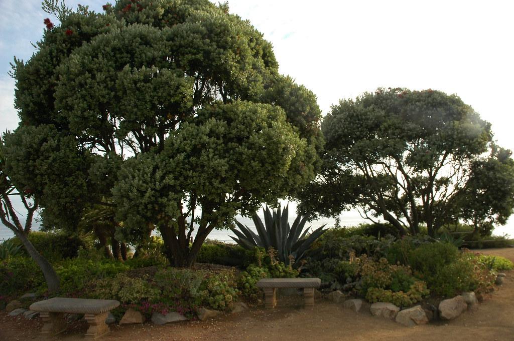 Meditation Garden Self Realization Fellowship Encinitas Flickr