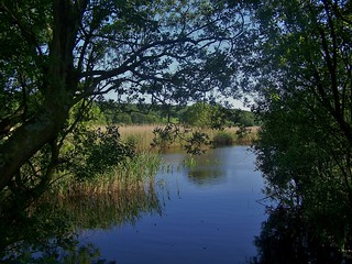 RSPB Leighton Moss, Lancashire, England - May 2009 | by SaffyH