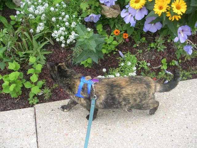 Tortoise Cat Again - Summer 2009