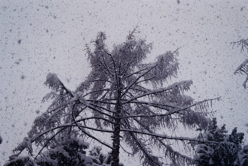 Snowfall I [Forni di Sotto - 29 December 2004] | by Doc. Ing.