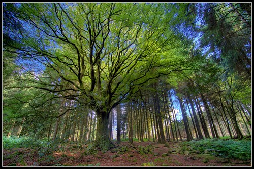 BROCELIANDE  - Bretagne - Spring suit for Ponthus - foret de paimpont | by philippe MANGUIN photographies