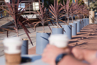 07929 View of row of planters while sipping coffee | by geekstinkbreath