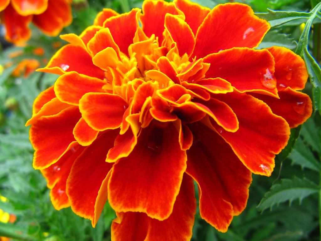 Ogoto Onsen 29 A Really Pretty Flower I Found Yuki Matsuda Flickr
