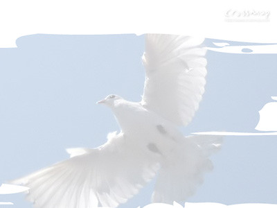 Christian Backgrounds Wallpaper Holy Spirit Dove 4 Flickr