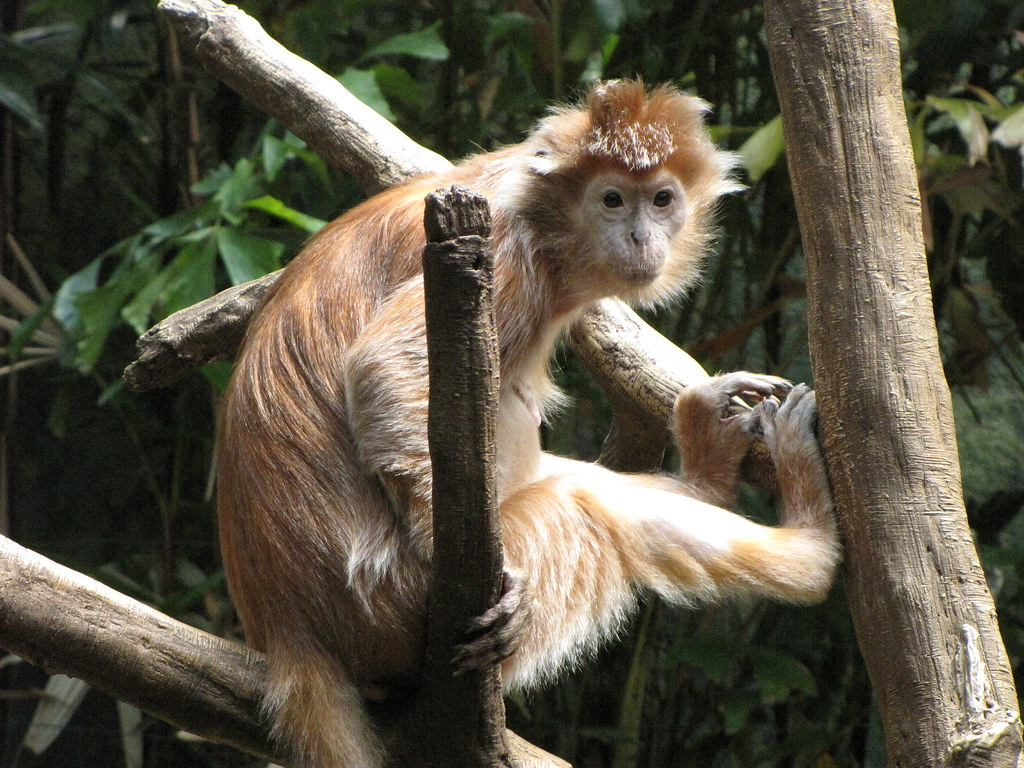 dr mary monkey free pdf