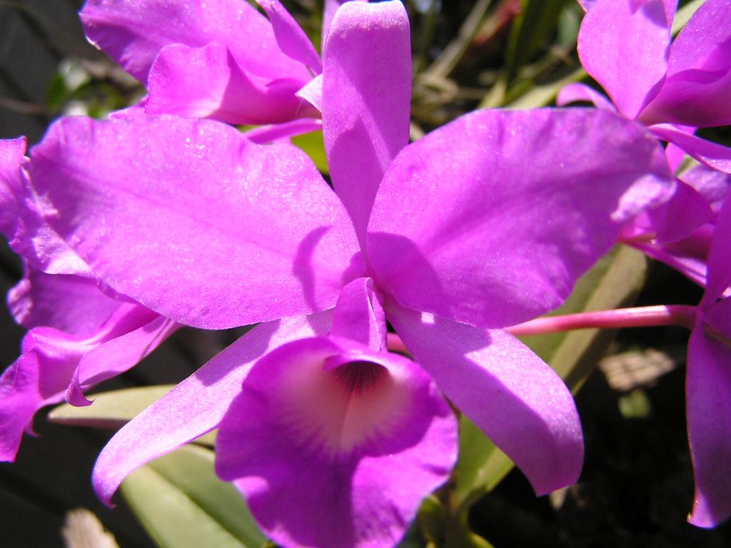 18 >> Guaria | Costa Rica national flower | JuanMCV1980 | Flickr